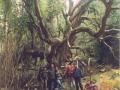 46_grande_albero400dpi